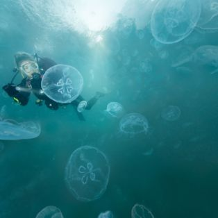 Take the plunge in Indonesia's so-called 'Jellyfish Bay' with this brave diver