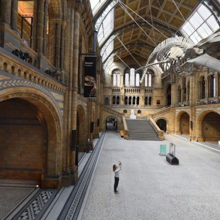 Welcome to the Natural History Museum's Hintze Hall, which will reopen its doors to visitors today