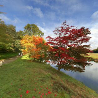 Welcome to Surrey and a glorious autumnal display in this colourful panorama